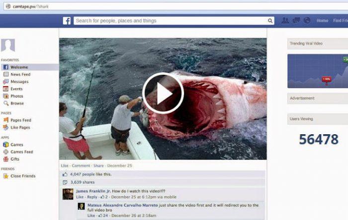 shark-video