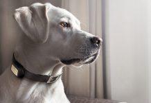 Tin tặc có thể lấy cắp dữ liệu thông qua máy theo dõi thú cưng